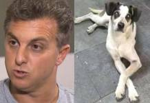 Luciano Huck e Cachorro agredido por funcionário do Carrefour - Foto/TV Globo/Divulgação