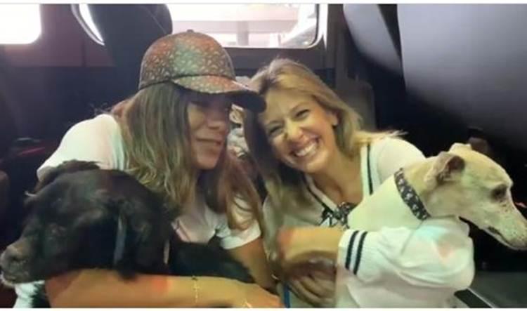 Anitta é recebida em aeroporto por Luisa Mell e adota cães idosos